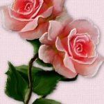 Rose4747